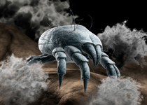 One gram of dust can contain up to 19.000 dust mites: microscopic creatures living, breathing and dying.